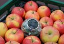 New sensor detects the freshness of fruit and vegetables