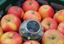 Neuer Sensor erfasst Frische von Obst und Gemüse