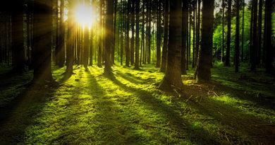 Wald als Vorbild für perfekte Kreislaufwirtschaft