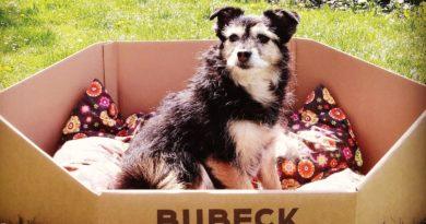 hundefutter verpackung wird zu hundekorb